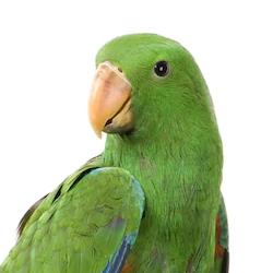 Parrot & Birds of Prey