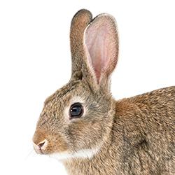 Feral Cat/Rabbit